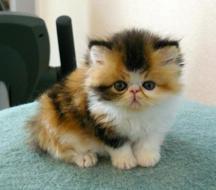 I'm Pretty Cute
